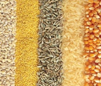 Import of food items starts rising