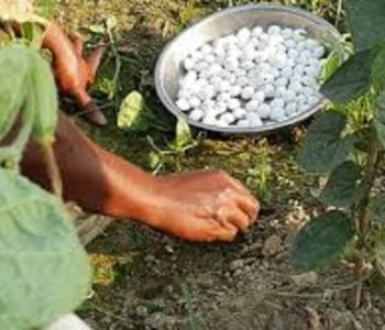 Fertilizer from Bangladesh to arrive next week