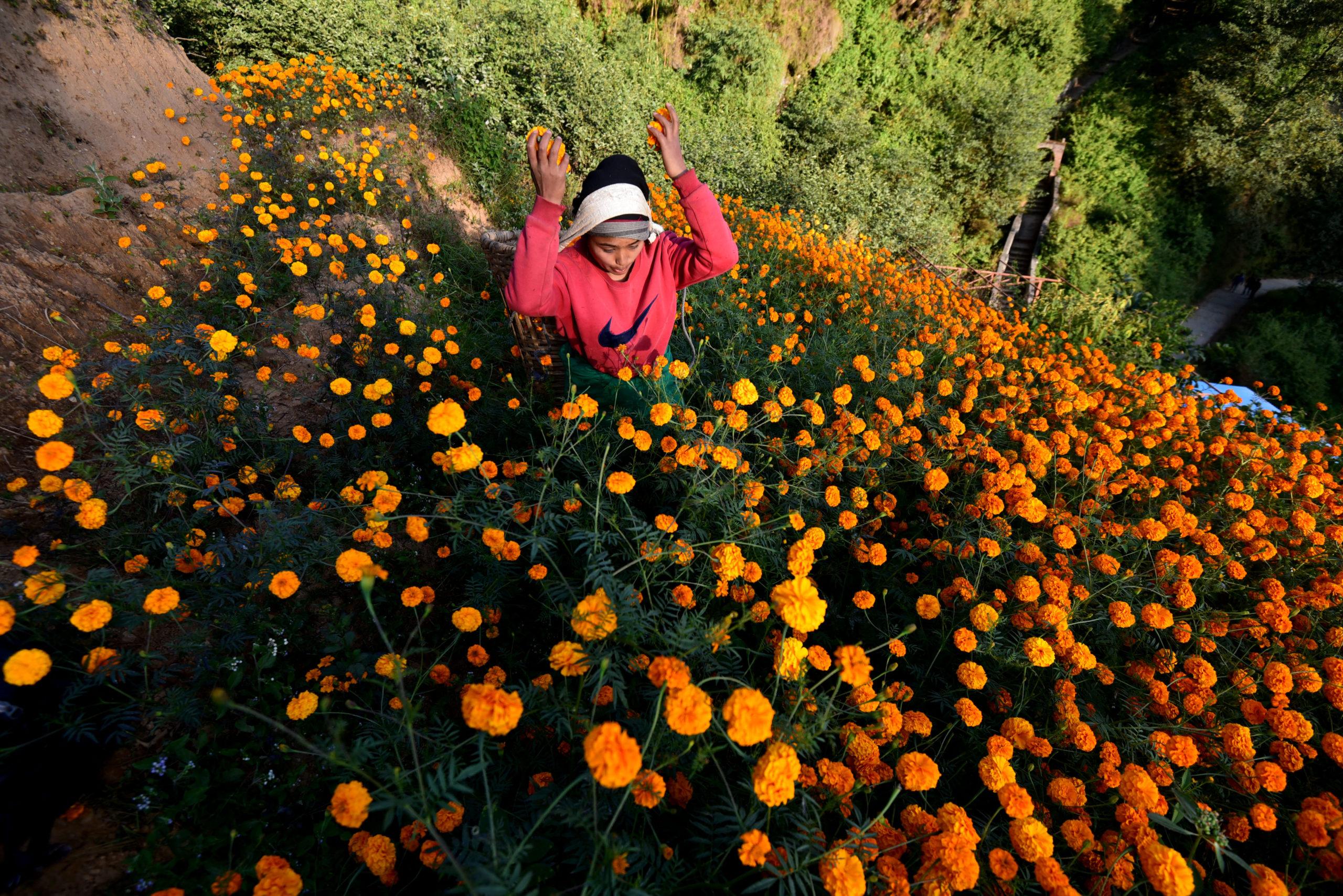 Flowery Ichankhu Narayan
