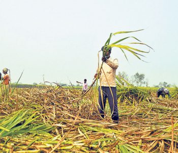 Cane farmers demand increase in sugarcane support price