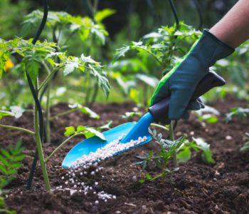 Preparation to build chemical fertilizer factory begins